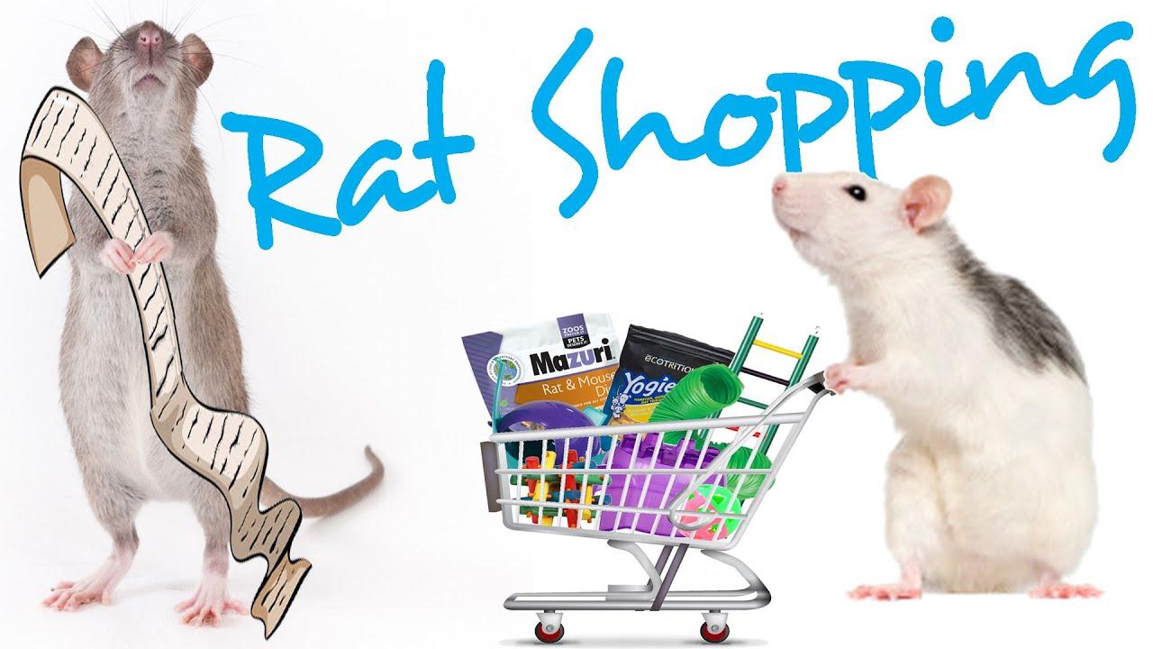 Pet Rat Ideas