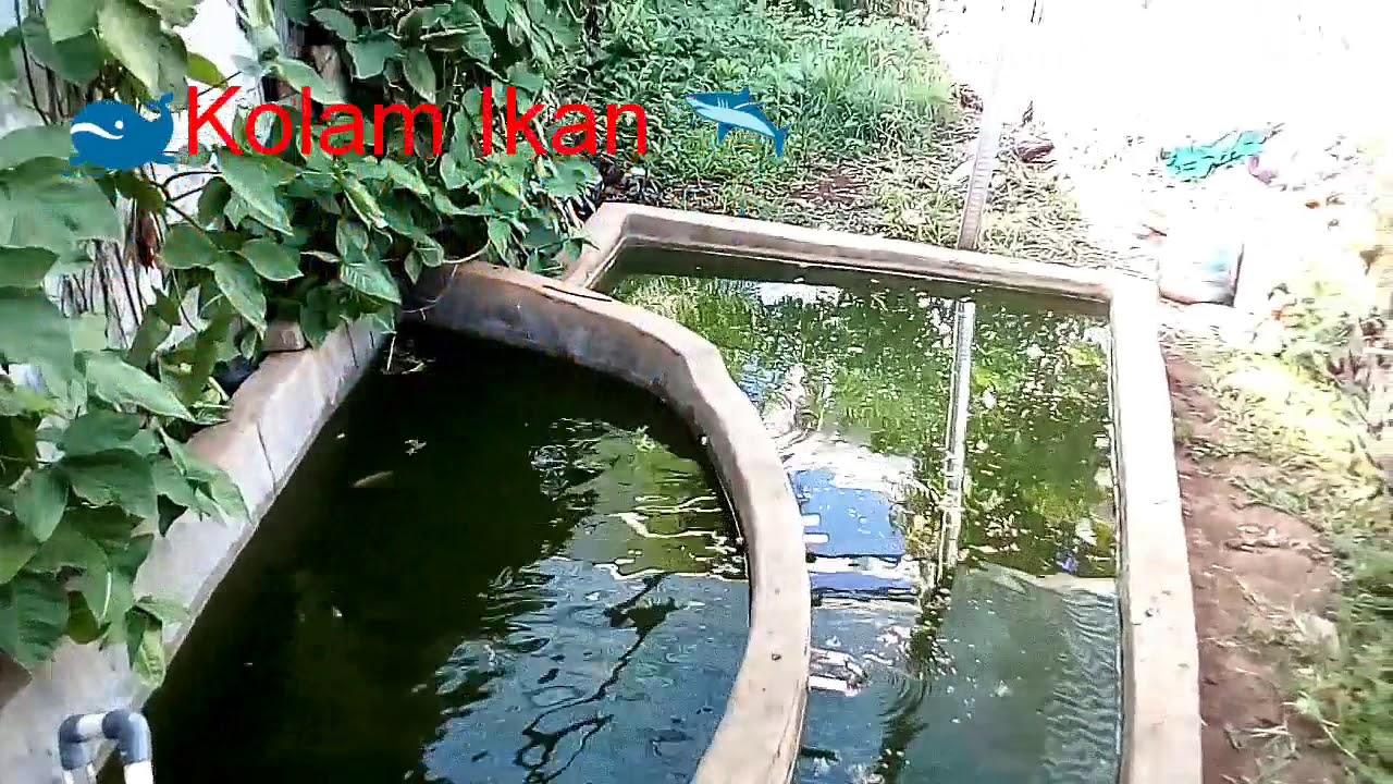 GREEN HOUSE PENDIDIKAN BIOLOGI UIN ALAUDDIN MAKASSAR #1