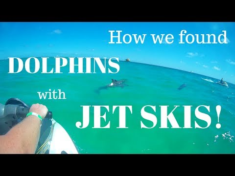 How To Find Dolphins With Jet Skis In Destin Florida (RV Florida)