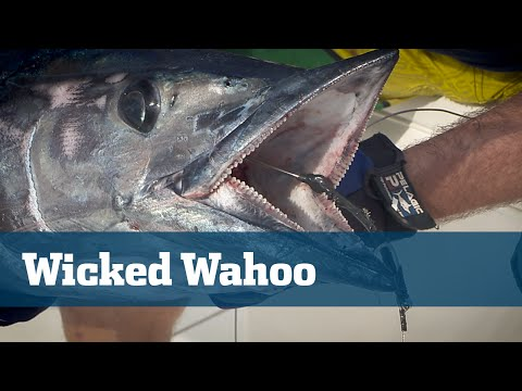 Florida Sport Fishing TV - Wahoo Trolling High Speed Lures - Season 06 Episode 08