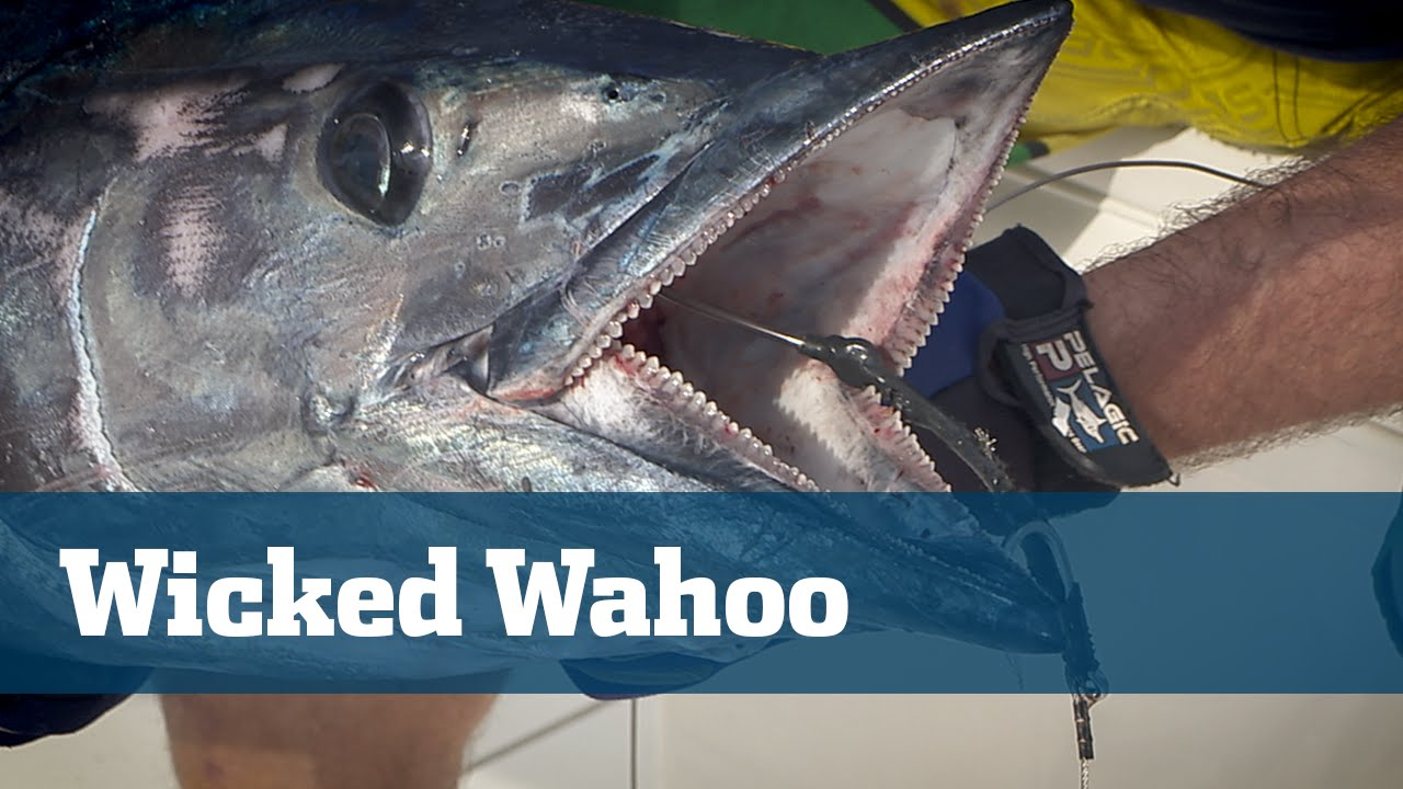 Wicked Wahoo High Speed Trolling - Season 06 Episode 08 - Florida Sport Fishing TV
