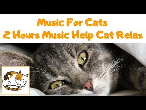 MUSIC FOR CATS - 2 Hours Music to Help Your Cat Relax
