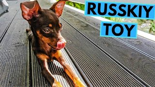 Russkiy Toy - TOP 10 Interesting Facts - Russian Toy