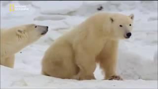 Russia: terra selvaggia - L'Artico