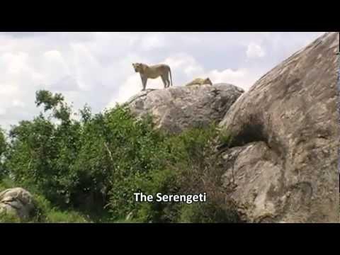 Guide to Safari holidays in Tanzania: Serengeti, Ngorongoro