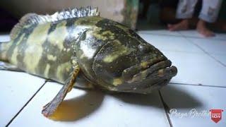 Mancing Ikan Kerapu, Dapat Yang Gede