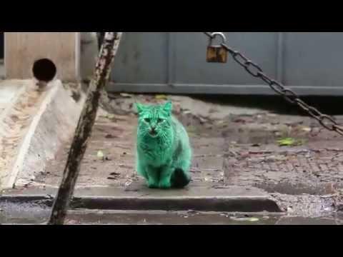 Meet the GREEN cat of Bulgaria Parte 2 HD 720