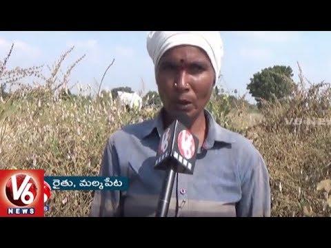 Reservoir Construction Leaves Many Cotton Farmers In Concern | Rajanna Sircilla Dist | V6 News