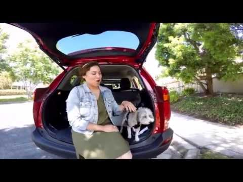 Enjoy taking your dog on an adventure? Let Manhattan Beach Toyota help you arrive safe