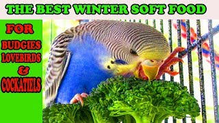 WINTER SOFT FOOD FOR BUDGIES, LOVEBIRDS AND COCKATIELS l URDU/HINDI