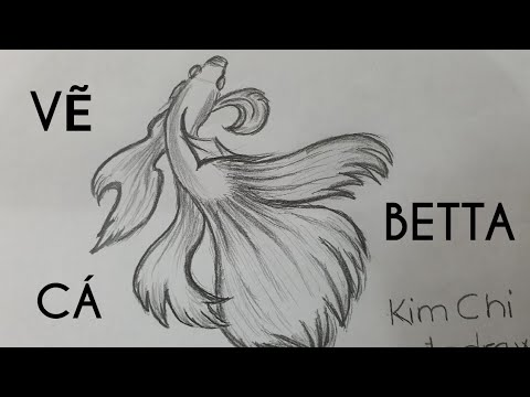 Cách Vẽ Cá Betta đơn giản bằng bút chì – How to Draw Betta Fish with pencil l Kim Chi Art & Draw