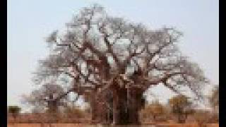 10 most magnificent trees