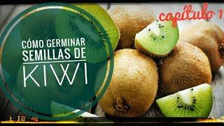 Cómo germinar semillas de kiwi || capítulo 1 || #diariodunnenolabrego