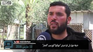 مصر العربية |  حديقة حيوان في غزة تعرض