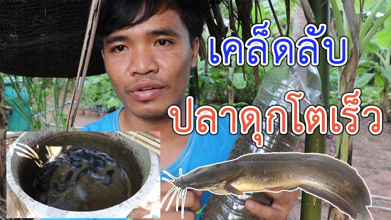 เลี้ยงปลาดุกในบ่ปูน วิธีให้อาหารปลาดุกในช่วง 1 เดือนแรก ให้ปลาโตเร็ว | อีสานร่มเย็น