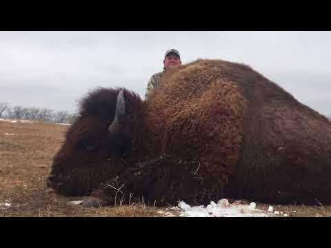 World Class Bison Hunting