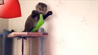 Funny cats and parrots