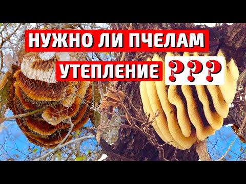 Вопрос: Зимой пчёлы в ульях спят без движения или двигаются?