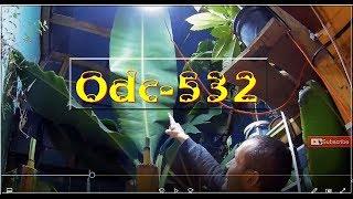 ✔🌴Odc-532-Zimowanie roślin egzotycznych,bananowców,bananów,warunki, ogólne porady. - Szklarnia