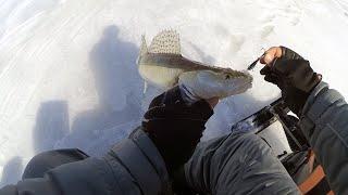 ПОГОНЯЛИ СУДАЧКА Рыбалка на Обском водохранилище в начале апреля судак на вибы