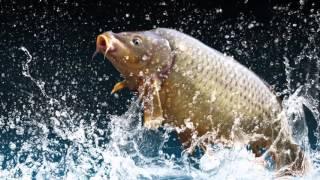 Рыболовная леска Carp Line для ловли карповых пород(, 2016-04-19T20:17:39.000Z)