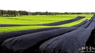 Korean Tea Plantation Time Lapse   Tea Pursuit