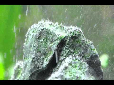 Hydrogen Peroxide As Algae Treatment