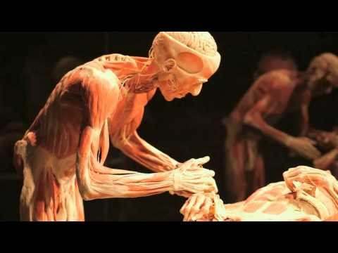 Gunther von Hagens' BODY WORLDS Vital at Life Science Centre, Newcastle UK