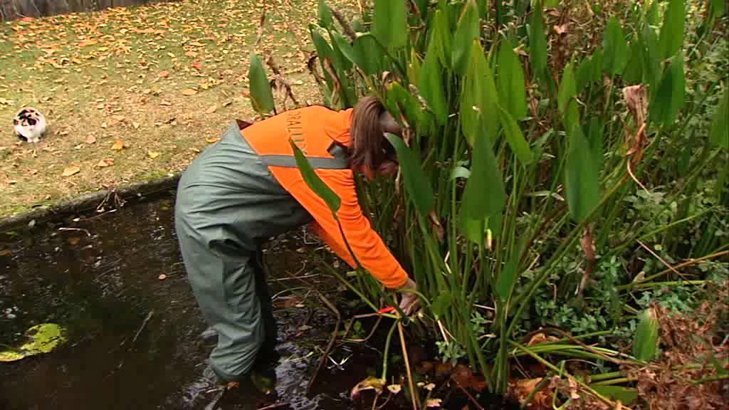 Astuce de jardin Floralux: Préparer l'étang pour l'hiver ...