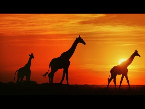 1 Hour of African Folk Music Instrumental  Marimba, Kalimba, & Drums
