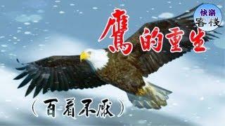 鷹的重生(百看不厭)|心靈勵志|快樂客棧