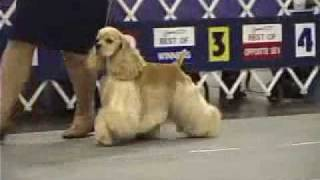 The 2007 Cocker Spaniel National Specialty