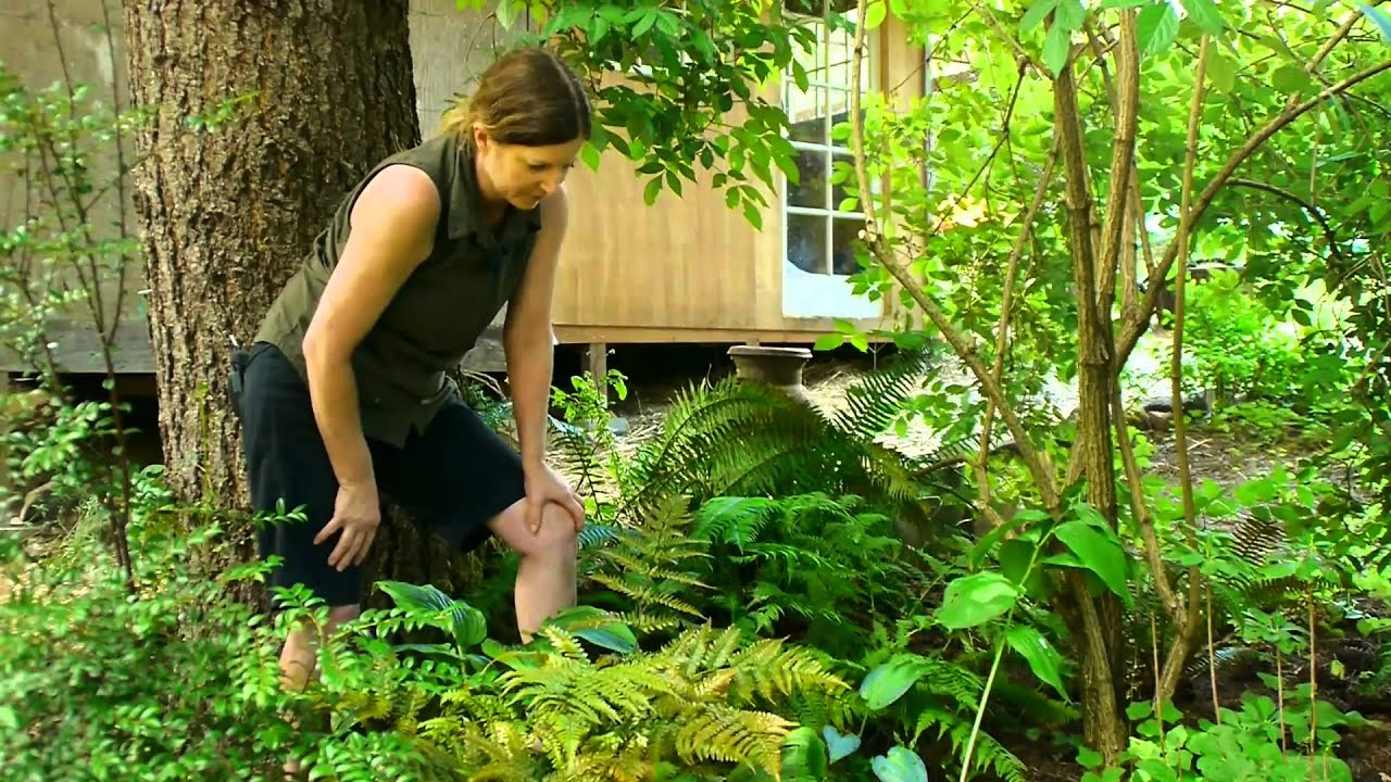 Transplanting & Maintaining Garden Perennials How To Landscape