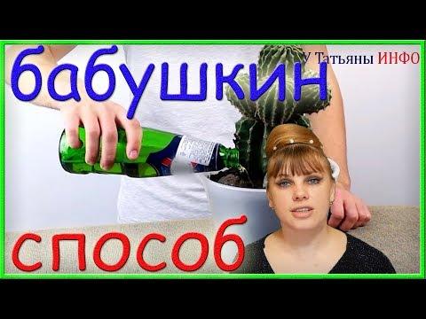 Бабушкин способ ПОДКОРМКИ рассады и комнатных растений ПИВОМ!