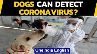 Covid-19: Scientists claim dogs can sniff Coronavirus with perfect accuracy, really?|Oneindia News
