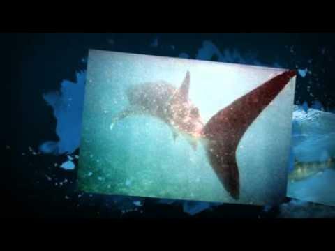Shark Adaptations