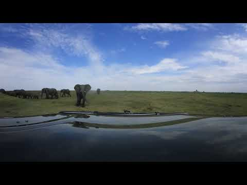 360 degree - Okavango Delta, elephant herd passing by