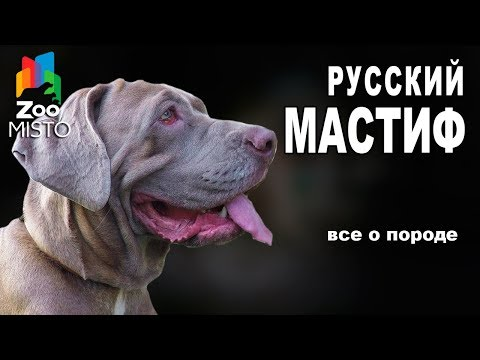 Русский Мастиф - Все о породе собаки | Собака породы - Русский Мастиф Меделян