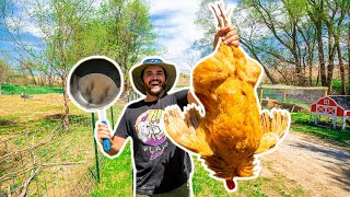 Backyard Farm GIANT ROOSTER Catch Clean Cook!!!