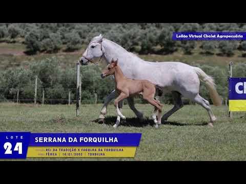 LOTE 24 - Serrana da Forquilha