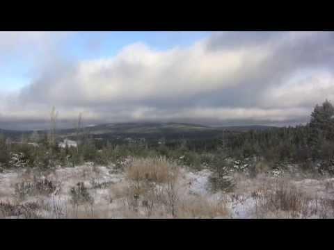Varg på första snön