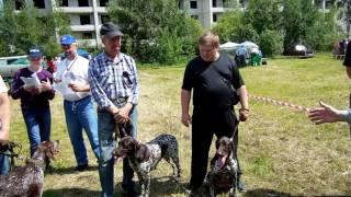 Пензенская выставка охотничьих собак