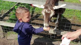 Fun Day at the Farm | Animal Sounds | Videos for Kids | Feeding Animals