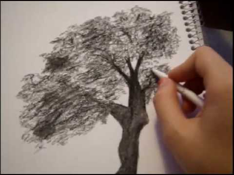 how to draw trees anime style