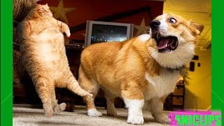 Dogs Doing Funny & Cute Things 2018 🐶 Funny Dog Vines Compilation