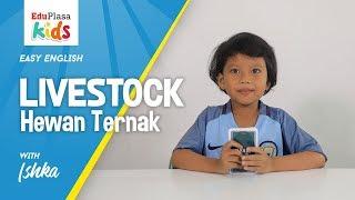 LIVESTOCK - HEWAN TERNAK   Easy English   English for Kids