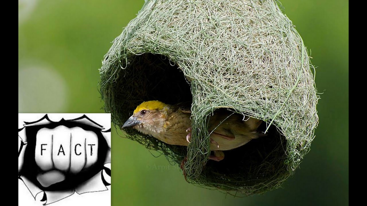 top 10 animal architects and the beautiful homes they build youtube
