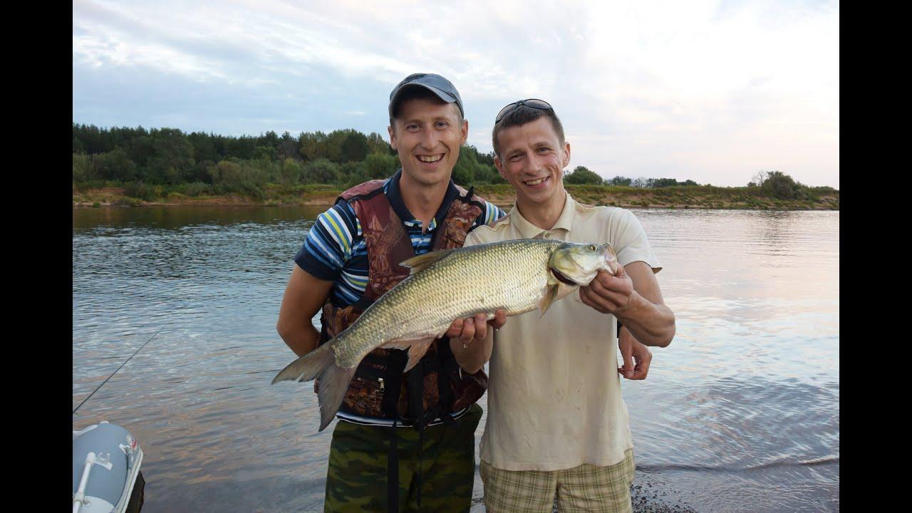 Рыбалка на Туре, ловля Налима