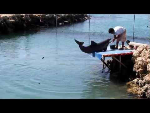 Dolphin Feeding, Solomon Islands
