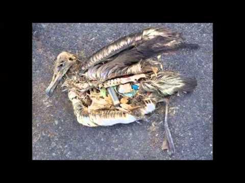 Geschmolzenes Plastik Gegessen